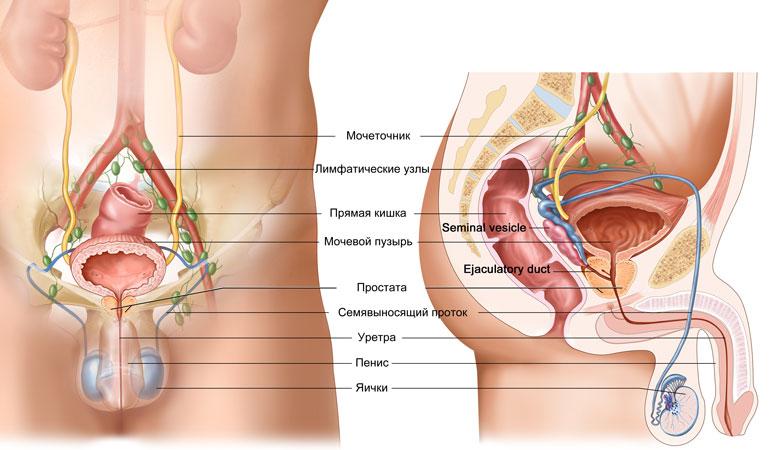 сколько стоит урологический пластырь от простатита